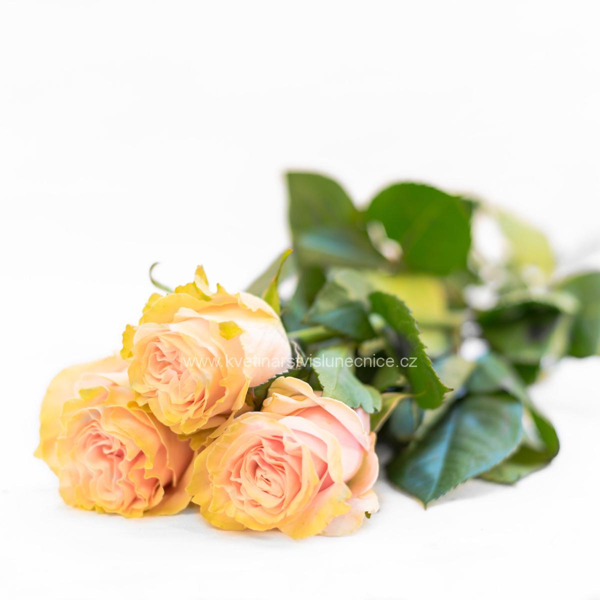 Tři jemně růžové růže stáhnuté stuhou