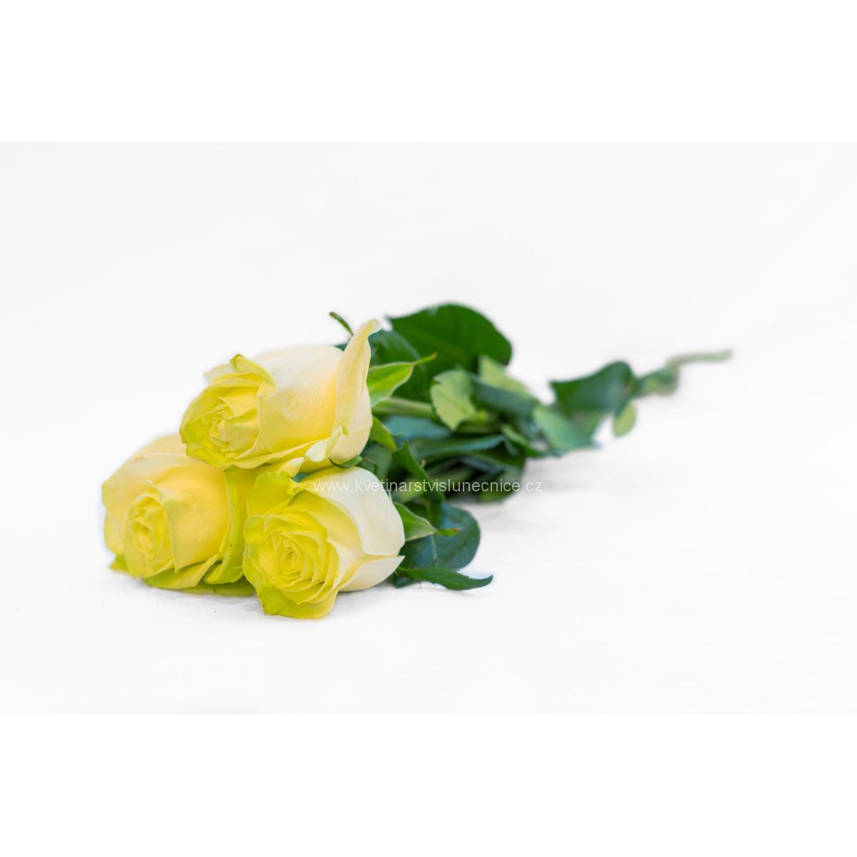Tři bílé růže stáhnuté saténovou stuhou